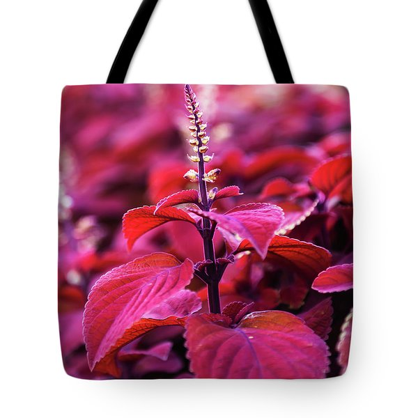 Tote Bag featuring the photograph Reds by Dheeraj Mutha
