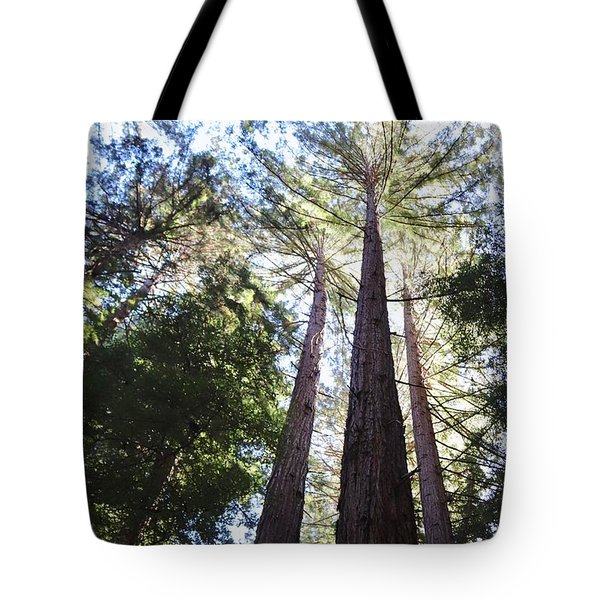 Redwoods, Blue Sky Tote Bag