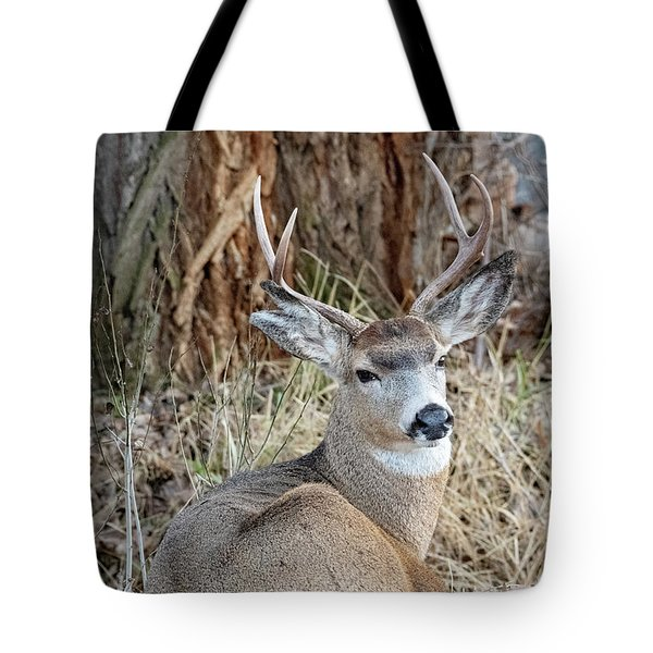 Resting Two-point Tote Bag