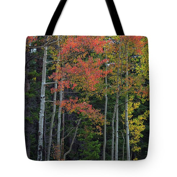 Tote Bag featuring the photograph Rocky Mountain Forest Reds by James BO Insogna
