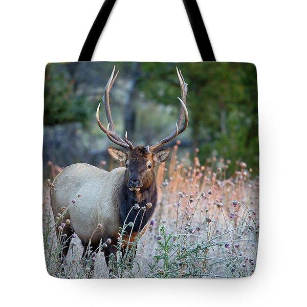 Rocky Mountain Wildlife Bull Elk Sunrise Tote Bag