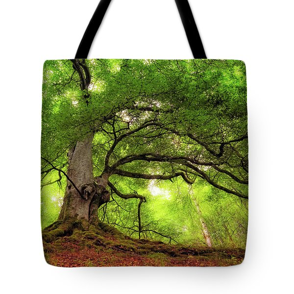 Roots Of Taymouth Estate - Scotland - Beech Tree Tote Bag
