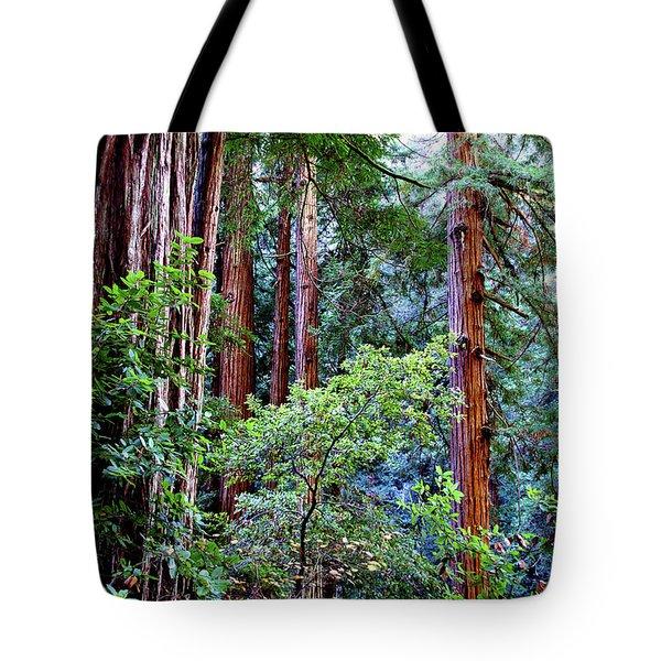 Samuel Taylor Redwoods 1 Tote Bag