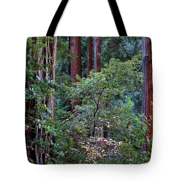 Samuel Taylor Redwoods 2 Tote Bag