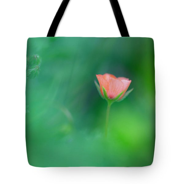 Scarlet Pimpernel Tote Bag
