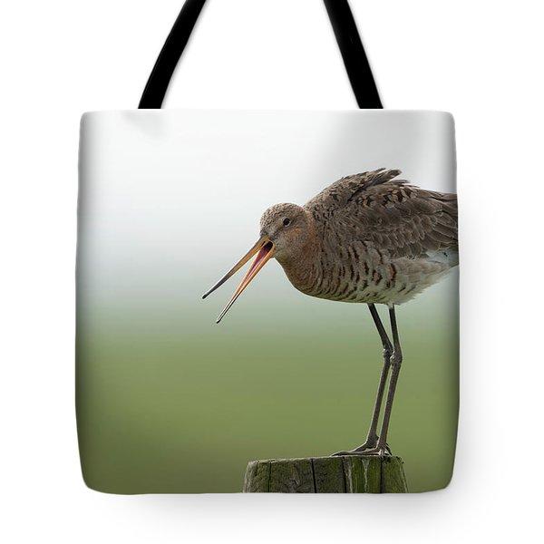 Scolding... Black-tailed Godwit Tote Bag