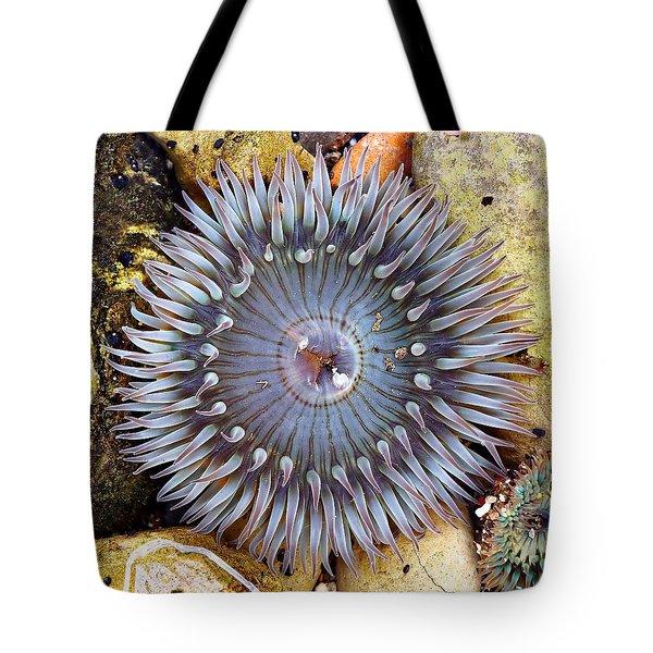 Sea-flower - Anemone Tote Bag