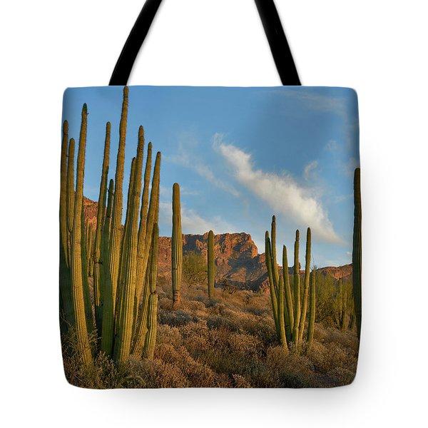 Senita Cactus, Ajo Mountains, Organ Tote Bag
