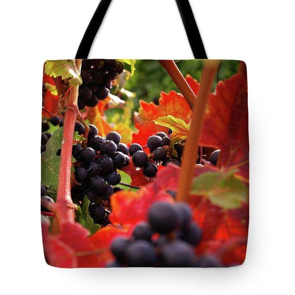 Shalestone - 2 Tote Bag