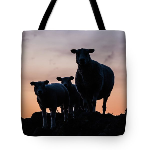 Tote Bag featuring the photograph Sheep Family by Anjo Ten Kate