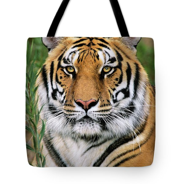 Siberian Tiger Staring Endangered Species Wildlife Rescue Tote Bag