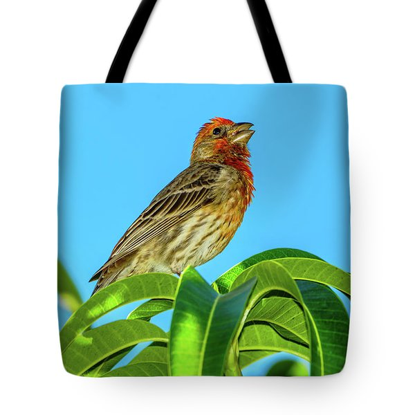 Singing House Finch Tote Bag