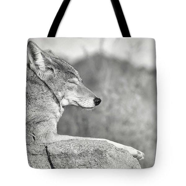 Sleepy Coyote Tote Bag