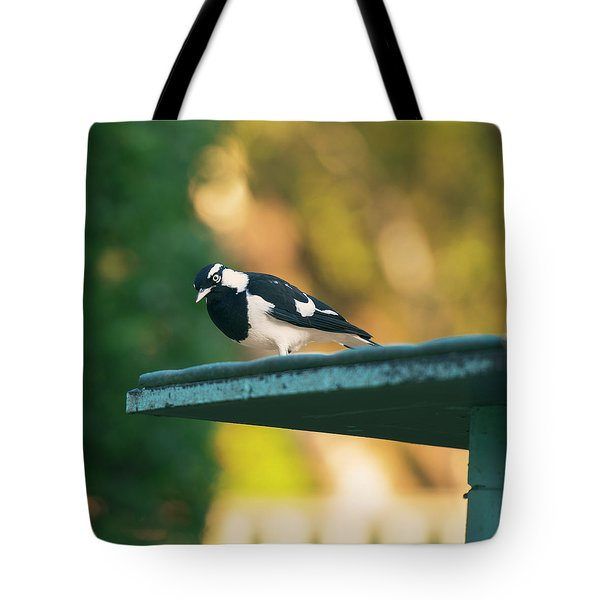 Small Magpie Lark Outside In The Afternoon Tote Bag