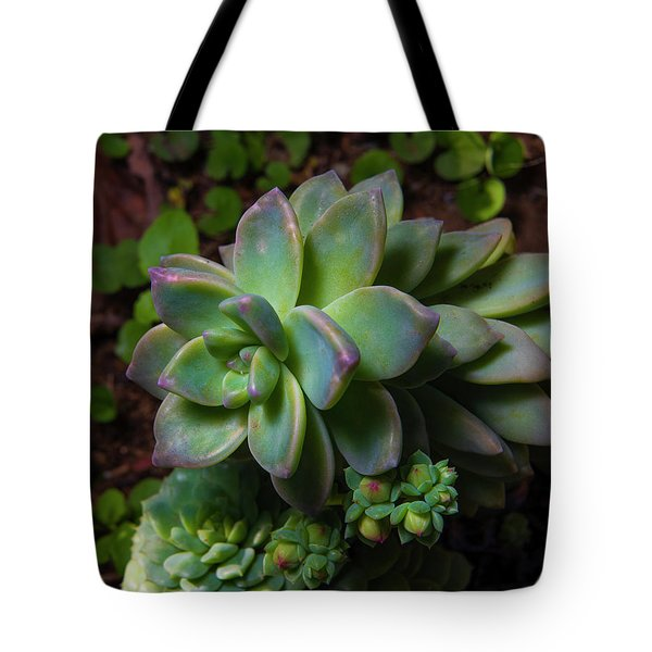 Small Succulents Tote Bag