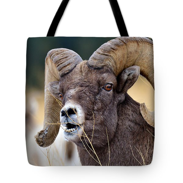 Snacking Ram Tote Bag