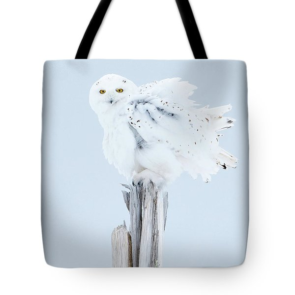 Snowy Owl Feather Shake Tote Bag