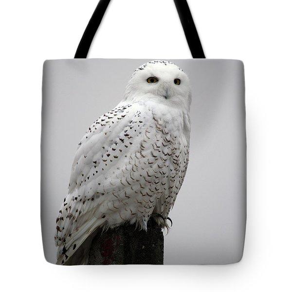 Snowy Owl In Fog Tote Bag