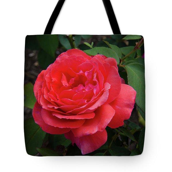 Solitary Rose Tote Bag
