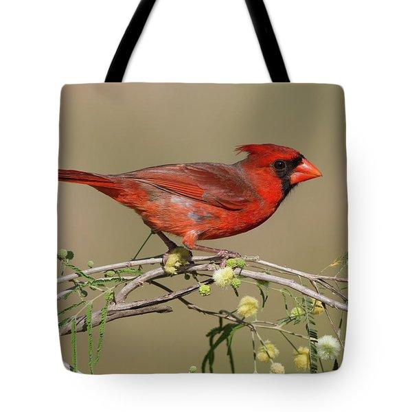 South Texas Cardinal Tote Bag