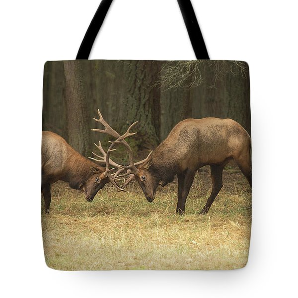Tote Bag featuring the photograph Sparring by Bob Cournoyer
