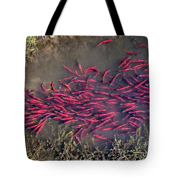 Spawning Kokanee Salmon Tote Bag