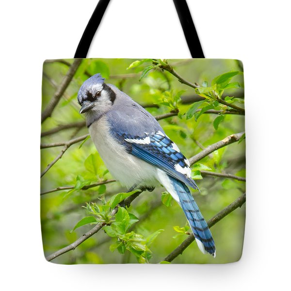 Springtime Bluejay Tote Bag