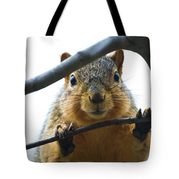 Spying Fox Squirrel Tote Bag