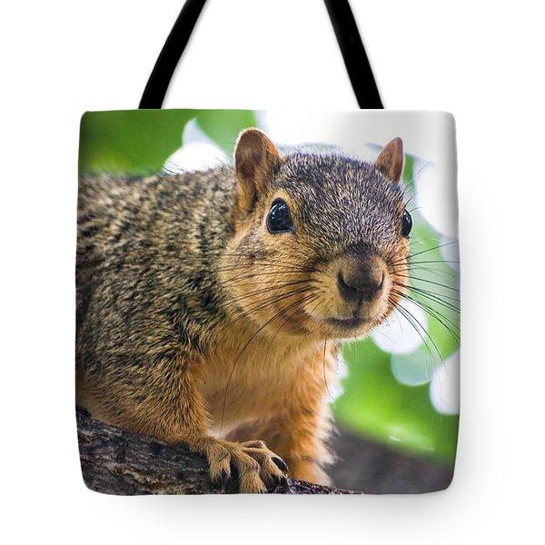 Squirrel Close Up Tote Bag