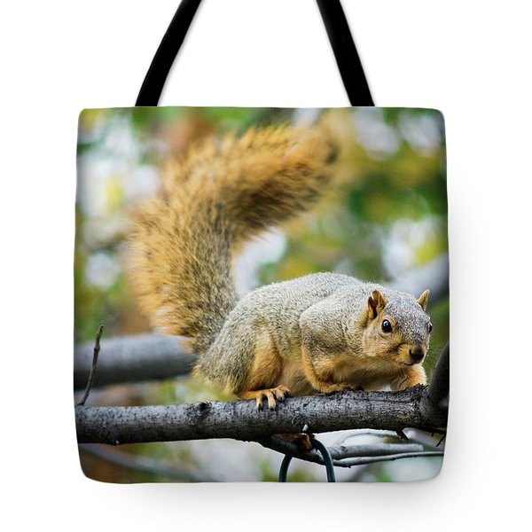 Squirrel Crouching On Tree Limb Tote Bag