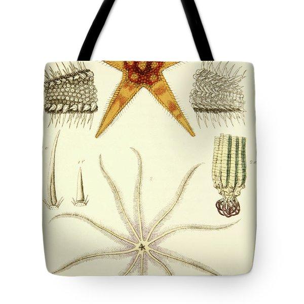 Starfish  Asterias Aurantiaca And Comatula Carinata Tote Bag