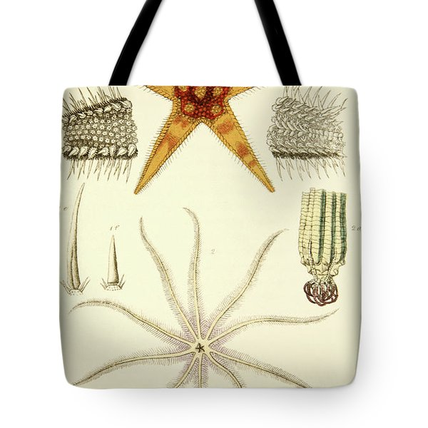 Starfish  Asterias Aurantiaca And Comatula Carinata Tote Bag