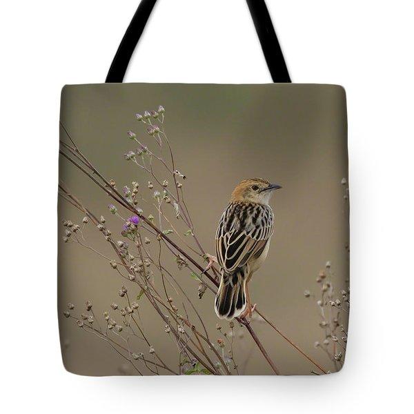 Stout Cisticola Tote Bag
