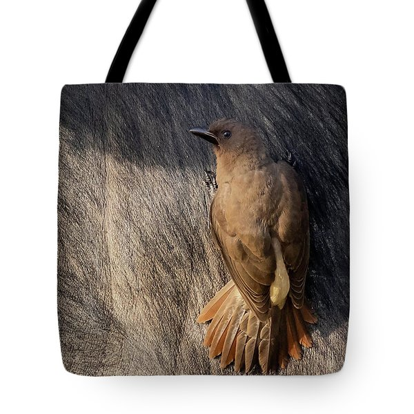 Tote Bag featuring the photograph Sub-adult Yellow-billed Oxpecker On Cape Buffalo by Thomas Kallmeyer