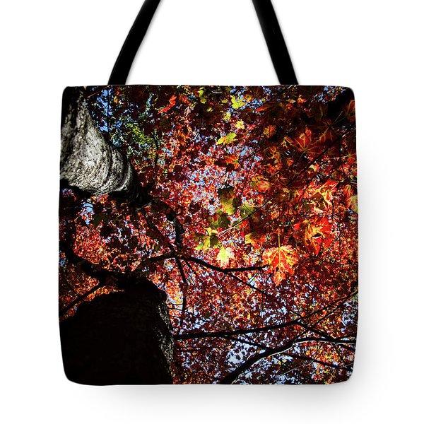 Sugar Maple In Fall Tote Bag