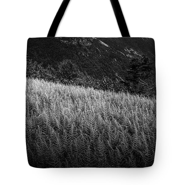 Tote Bag featuring the photograph Sunlight On Ferns, Mount Willard by Wayne King