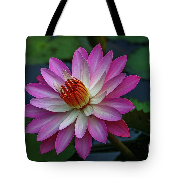 Tote Bag featuring the photograph Sunlit Lily by Tom Claud