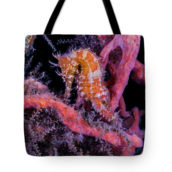 Surrounded Colors Tote Bag