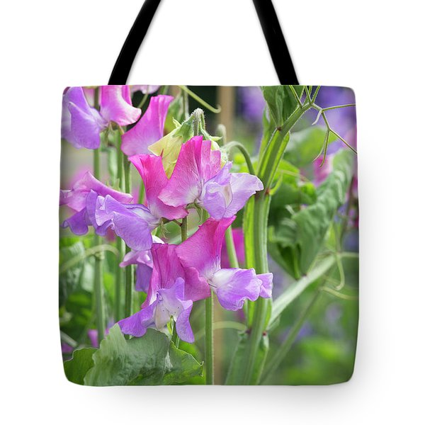 Tote Bag featuring the photograph Sweet Pea Prima Ballerina Flowers by Tim Gainey