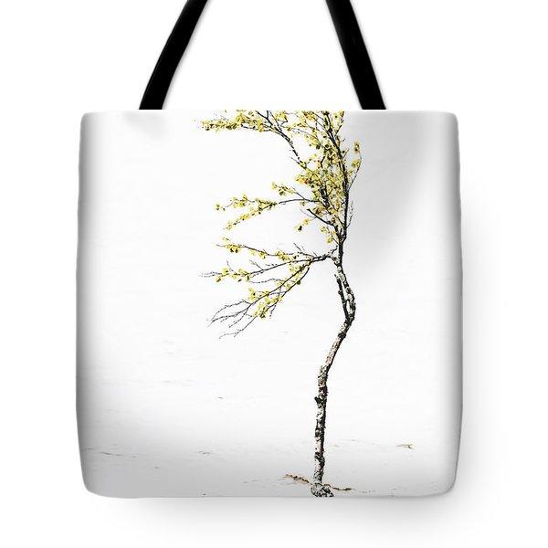 The Birch Tree Tote Bag