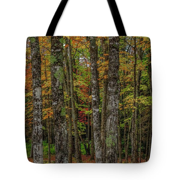 The Fall Woods Tote Bag