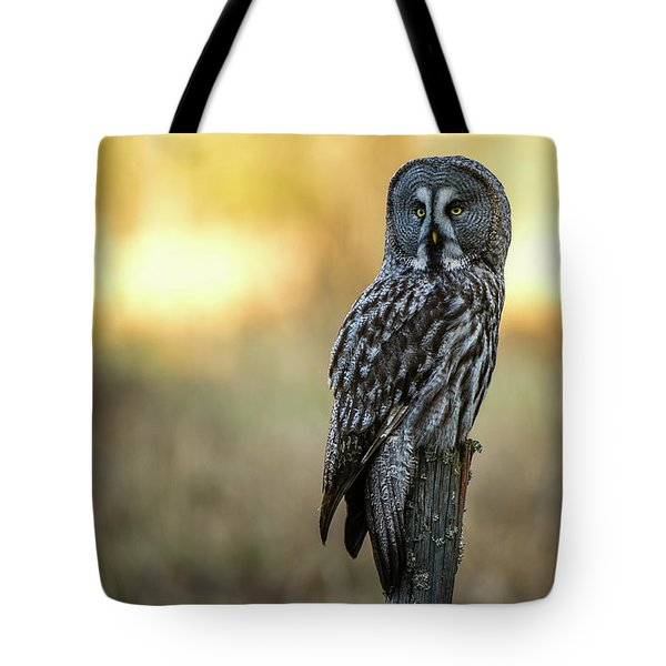 The Great Gray Owl In The Morning Tote Bag