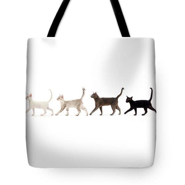Tote Bag featuring the photograph The Kits Parade - Four by Warren Photographic