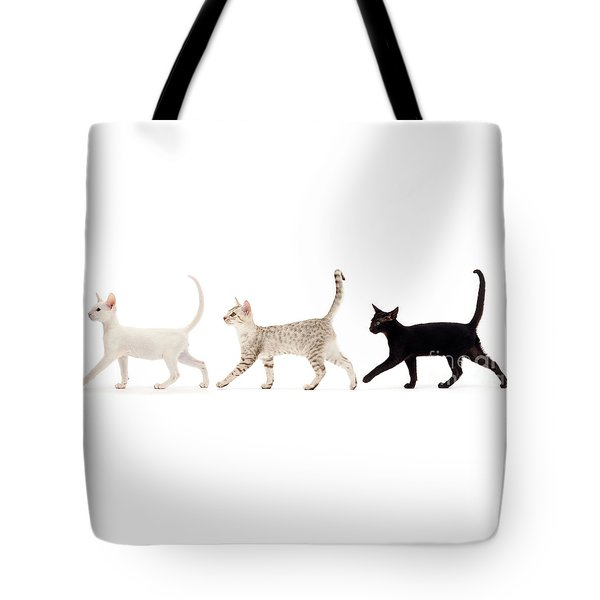 The Kits Parade - Three Tote Bag