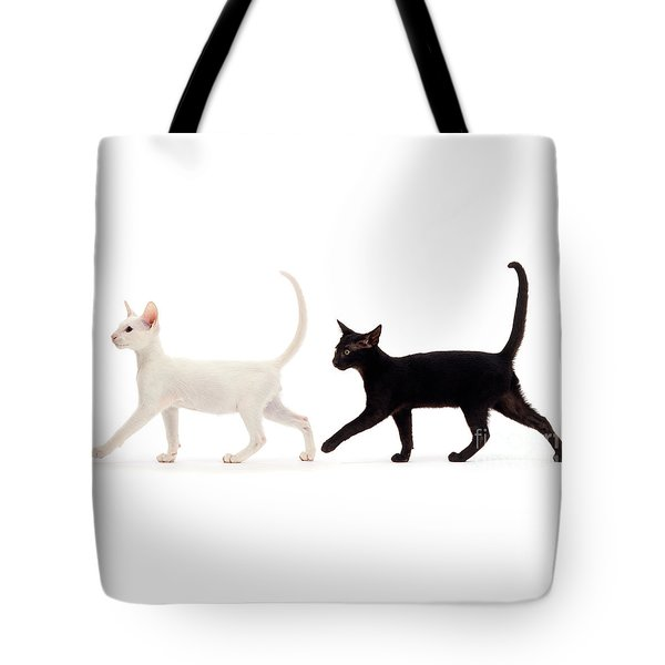 Tote Bag featuring the photograph The Kits Parade - Two by Warren Photographic