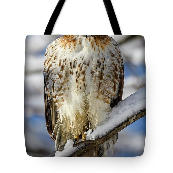 Tote Bag featuring the photograph The Look, Red Tailed Hawk 1 by Michael Hubley
