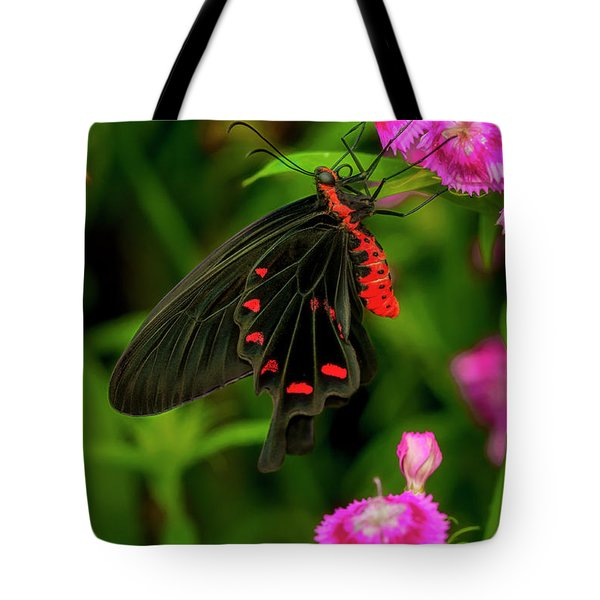The Semperi Swallowtail Butterfly Tote Bag