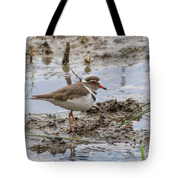 Tote Bag featuring the photograph Three-banded Plover by Thomas Kallmeyer