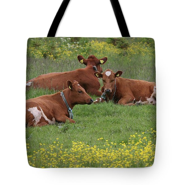 Tote Bag featuring the photograph Three Cows by PJ Boylan