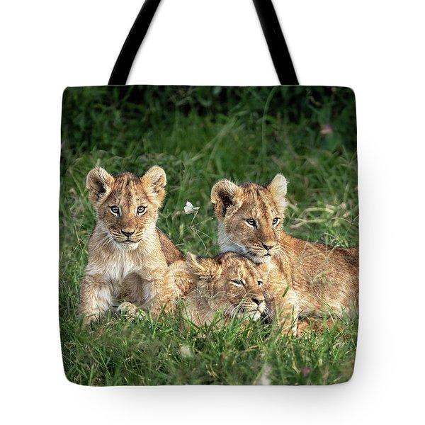 Three Cute Lion Cubs In Kenya Africa Grasslands Tote Bag